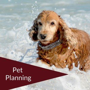 New York Pet Planning Attorneys